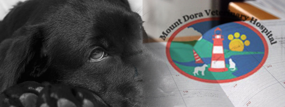 Sick dog and appointment book with Mount Dora Veterinary Hospital logo super imposed