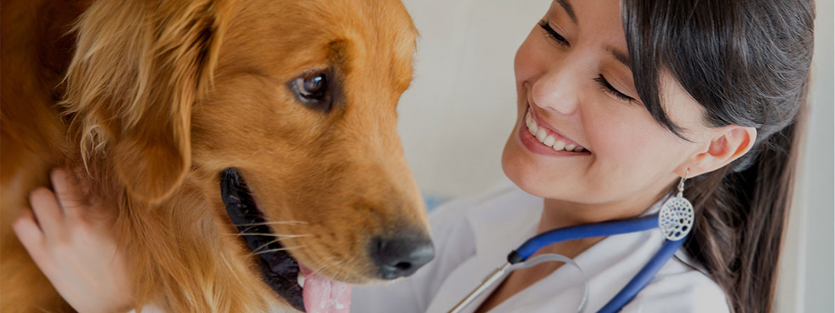 A veterinarian examining a dog